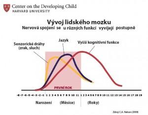 Vývoj lidského mozku